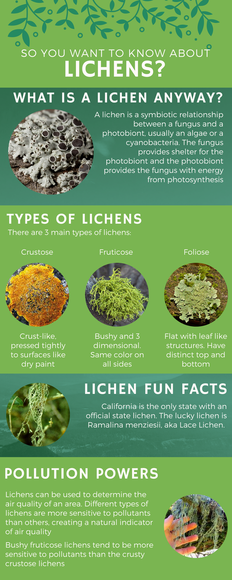So you want to know about lichens