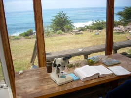 keying plants with a view at the Rancho Marino Reserve