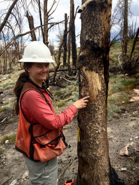 Amanda points out pine beetle galleries in the Walker Fire - whitebark pine forest above Gibbs Lake, Mono County, CA