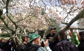 Looking at lichens on a magnolia with students in my Jepson Herbarium workshop