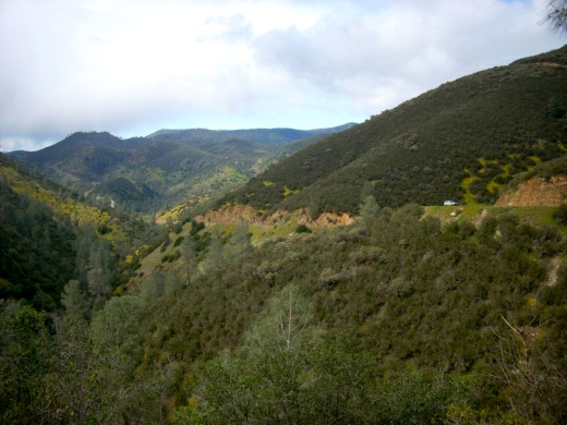 Landscape at one of the California statewide serpentine survey sites I did for Susan Harrison - one of the best jobs I've ever had!