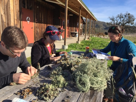 Looking at lichens at the CALS annual meting