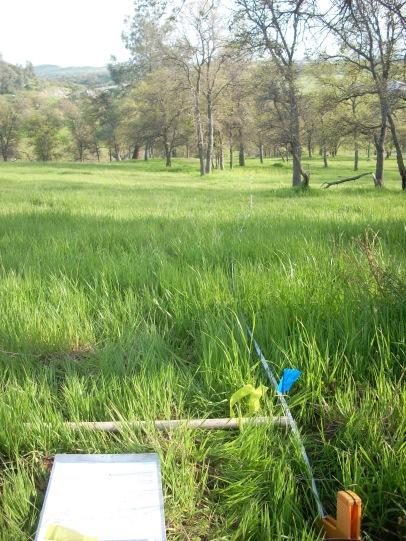Quadrat view of a veg plot near the New Hogan Reservoir in the Sierra Foothills for Susan Harrison's California statewide plant community survey, 2009