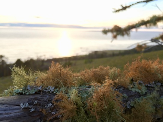 Epiphytic lichens on a coastal ridge at the UCSB Rancho Marino Reserve