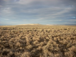 Sagebrush steppe landscape near Burns, Oregon - one of our study sites in the 2009-2010 soil crust survey with Heather Root