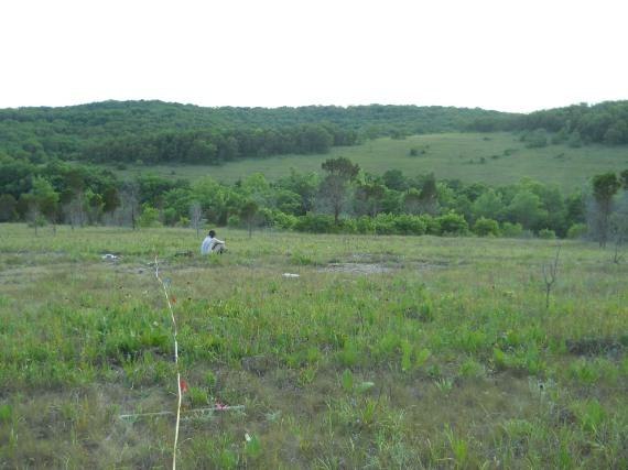 Study plot in Victoria Glade, Jefferson Co., Missouri