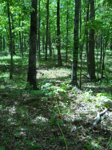 Ozark woodland study plot in Ozark National Forest near Fayetteville, Arkansas