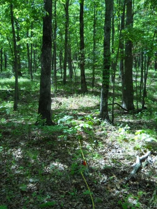 Ozark woodland study plot in Ozark National Forest near Fayetteville