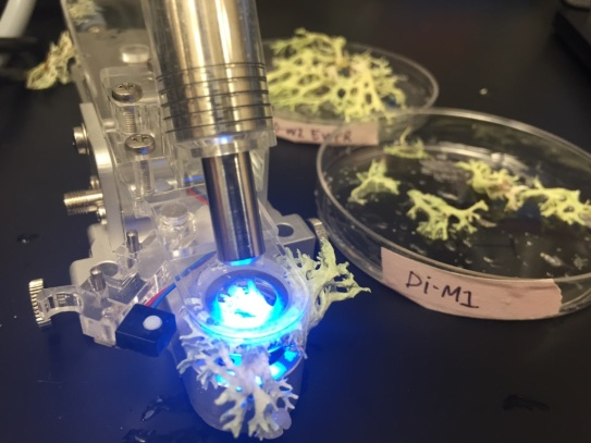 Measuring lichen photosynthetic capacity in my ecology research class - 2019