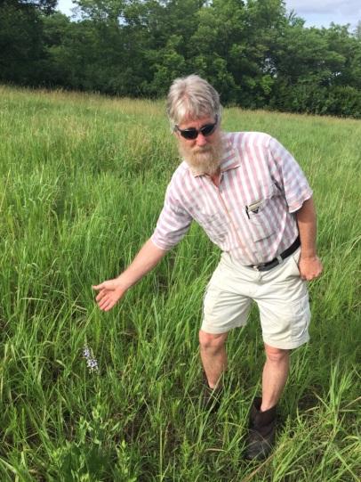 Loberlia spicata is an indicator of unplowed prairies, says Dr. Kelly Kindscher - 2019