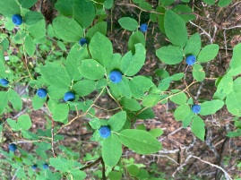 Benefits of Botanizing - Gifford Pinchot National Forest, summer 2020